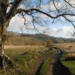 The track down to Capel Curig